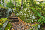 Boulders and Stone Steps on Valley Trail, Beech Mountain, Acadia National Park, Mt Desert Island, Southwest Harbor, ME
