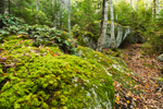 Moss-covered Boulders along Valley Trail on Beech Mountain, Acadia National Park, Mt Desert Island, Southwest Harbor, ME