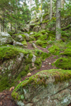 View of Boreal Forest and Moss-covered Rocks off the Valley Trail on Beech Mountain, Acadia National Park, Mt Desert Island, Southwest Harbor, ME