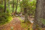 Jordan Stream Path along Jordan Stream in Autumn, near Jordan Pond House, Acadia National Park, Mt Desert Island, Mount Desert, ME