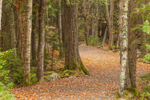Carriage Road in Fall near Jordan Pond House, Acadia National Park, Mt Desert Island, Mount Desert, ME