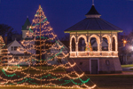 Holiday Lights on Trees and Gazebo in Ocean Park at Predawn, Martha's Vineyard, Oak Bluffs, MA