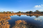 Freshwater Marshes and Pond in Early Evening Light, Martha's Vineyard, Edgartown, MA