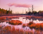 Freshwater Marsh in Early Morning Winter Light, Birch Hill Recreation and Wildlife Management Area, Royalston, MA