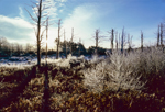 Heavy Frost in Wetlands, Birch Hill Recreation and Wildlife Management Area, Royalston, MA