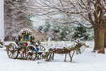 """Reindeer"" Drawn Old Carriage after Snowstorm, Suffield, CT (Created by Marcy Calcasola)"