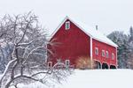 Big Red Barn and Old Apple Tree in Winter, Plymouth, VT