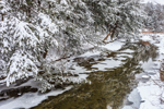 Snow-covered Conifers along Black River, Plymouth, VT