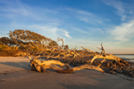 Early Morning Light on Driftwood Beach, Jekyll Island, GA