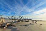 Early Morning on Driftwood Beach, Jekyll Island, GA