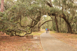 Bike Path through Arching Live Oak Trees Draped with Spanish Moss, Jekyll Island, GA