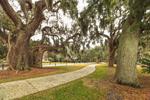 Bike Path through Live Oak Trees Draped with Spanish Moss, Jekyll Island Historic District, Jekyll Island, GA