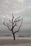 Lone Tree at Water's Edge on Driftwood Beach, Jekyll Island, GA