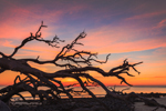 Sunrise at Driftwood Beach, Jekyll Island, GA