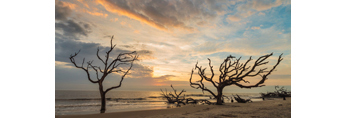 Clearing Skies at Sunrise over Old Snags on Driftwood Beach, Jekyll Island, GA