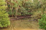 Tidal Creek and Maritime Forest in Timucuan Ecological and Historic Preserve, Fort George Island, Jacksonville, FL