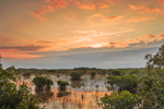 Sunrise over Red Mangroves and Wetlands Prairie, Everglades National Park, FL