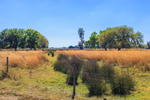 Cow Pasture with Colorful Grasses and Rushes in Wetlands near Zolfo Springs, Hardee County, FL