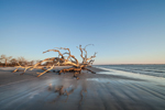 Early Morning Light on Driftwood Beach, Jekyll Island, GA