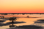 Sunset over Mangroves, Marshes, and Mudflats at Merritt Island National Wildlife Refuge, Titusville, FL