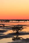 Sunset over Mangroves, Marshes, and Mudflats at Merritt Island National Wildlife Refuge, Titusville, FL