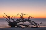 Driftwood Beach at Predawn, Jekyll Island, GA