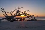 Driftwood Beach at Sunrise, Jekyll Island, GA