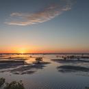 Sunset over Mangroves and Mudflats at Merritt Island National Wildlife Refuge, Titusville, FL