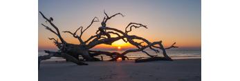 Driftwood Beach at Sunrise, Jekyll Island, GA