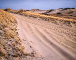 Trail through Dunes near Race Point, Cape Cod National Seashore, Cape Cod, Provincetown, MA