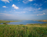 Prairie Wildflowers and Chase Lake, Chase Lake National Wildlife Refuge, Stuttsman County, ND