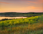 Wildflowers and Prairie Pothole at Sunset, Dead Dog Slough, Lostwood National Wildlife Refuge, Burke County, ND