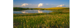 Prairie Pothole, Canola Fields, and Thunderclouds, McClean County, ND