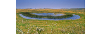 Prairie Pothole in Grazing Land, Stuttsman County, ND