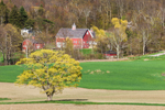 View of Red Barns and Fields in Early Spring at High Valley Farm, Taconic Mountains, Copake Falls, NY