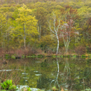 Colorful Reflections at Pond on Early Spring Morning, High Valley Farm, Taconic Mountains, Copake Falls, NY