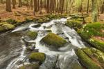 Rutland Brook in Early Spring, Massachusetts Audubon Wildlife Sanctuary, Petersham, MA