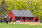 Red Barn and Arabian Horses in Pasture at Quarry Hill Farm, Salisbury, CT