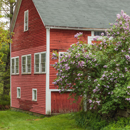 Old Red Barn with Lilac Bushes and Red Maple Tree in Early Spring, Tully Village, Town of Orange, MA