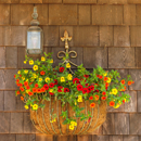 Colorful Flower Boxes on Cedar-shingled Builiding in Menemsha, Martha's Vineyard, Chilmark, MA