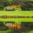 Orange Day-lilies and Bench Reflecting in Calm Water of Sparkle Plenty Pond, Mulpus Brook Acres Property, Lunenburg, MA