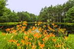 Orange Day-lilies and Bench Overlooking Sparkle Plenty Pond, Mulpus Brook Acres Property, Lunenburg, MA