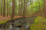 Mulpus Brook Flowing through Eastern Hemlock Forest on Mulpus Brook Acres Property, Lunenburg, MA