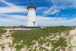 Edgartown Lighthouse with Beach Roses in Bloom, Martha's Vineyard, Edgartown, MA
