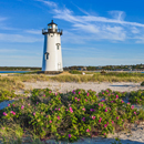 Beach Roses in Bloom at Edgartown Lighthouse in Evening Light, Martha's Vineyard, Edgartown, MA