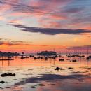 Colorful Sunrise over Boats in Sherman Cove in Camden Harbor, Camden, ME