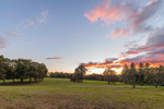 Trees and Grassy Meadow at Sunset, Natick, MA