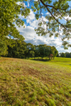 Grassy Meadow and Hardwood Trees on Sunny Day, Natick, MA