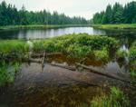 Wetlands Edge, Aziscohos Lake, Rangeley Lakes Region, Lincoln, ME (T5 R2)