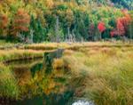 Marsh in Evans Brook, White Mountain National Forest, Batchelders Grant, ME